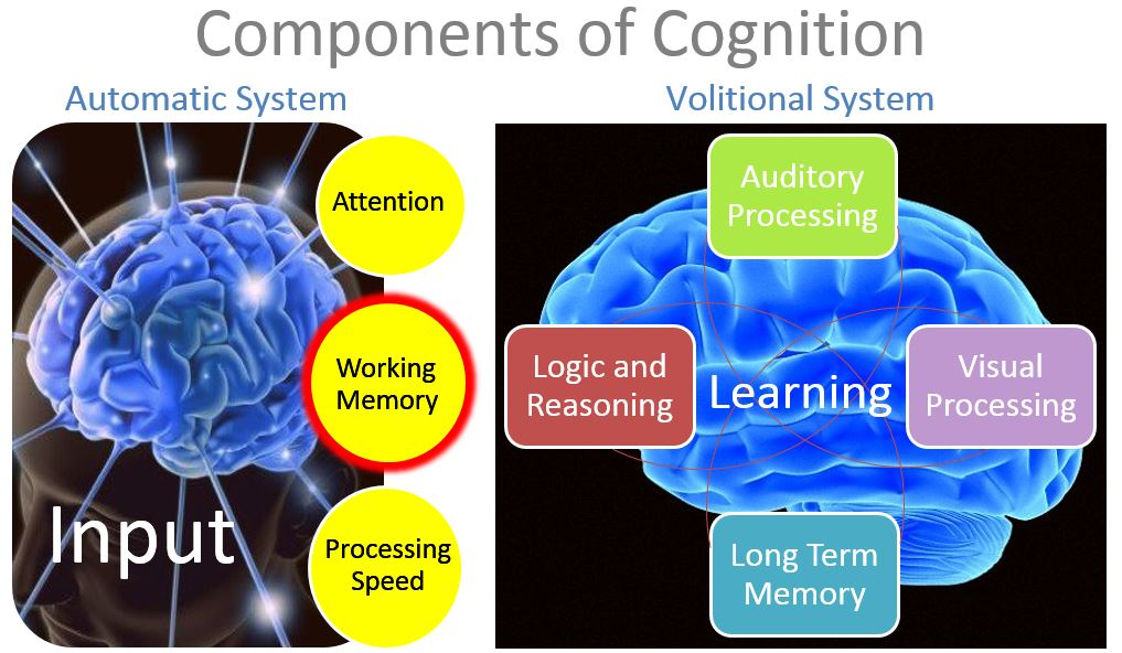 Midbrain activation course fees image 1